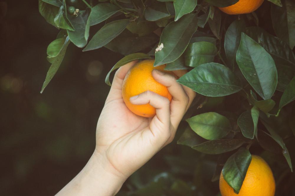 سعر الدومين اختيار برتقال
