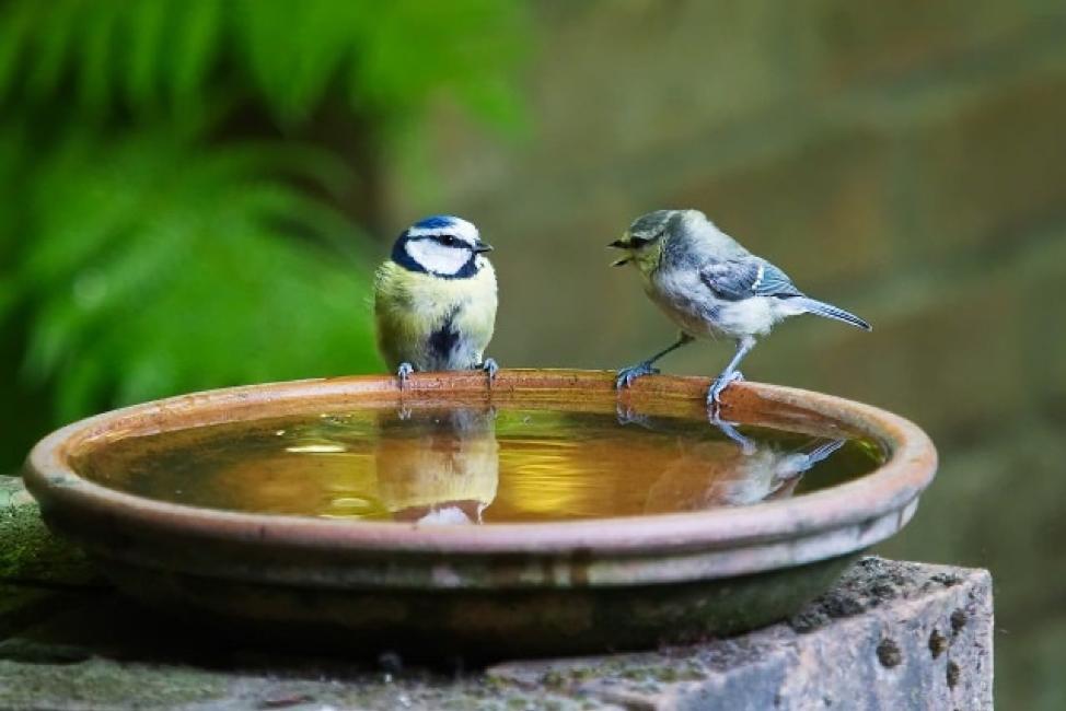 صفات المدير الناجح عصفوران ماء