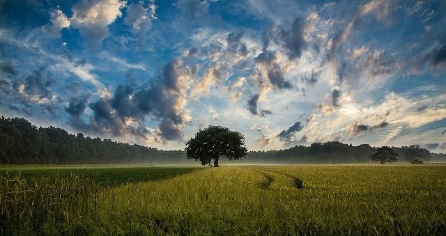 وسائل شجرة خضراء